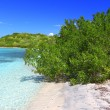Stock Photo: Beach in British Virgin Islands