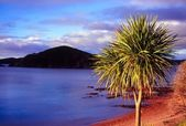 Bay of Islands - New Zealand — Stock Photo