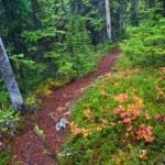 Jasper National Park Hiking Path — Stock Photo #8294585