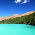 Peyto Lake in Banff Park — Stock Photo