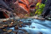 Zion Canyon Narrows — Stock Photo
