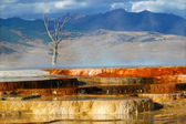 Canary Spring of Yellowstone Park — Stock Photo