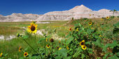Badlands National Park Wildflowers — Stock Photo