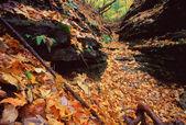 Kishwaukee gorge floresta preservar — Fotografia Stock