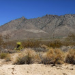 Mojave Desert - southern California — Stock Photo #8592899