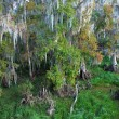 Florida Swamp — Stockfoto