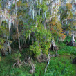 Florida Swamp — Stock Photo