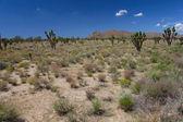 Mojave Desert - southern California — Stock Photo