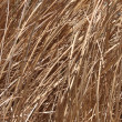 Dead grass background — Stock Photo