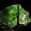 Stock Photo: Cave Spring - Natchez Trace Parkway