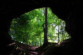 Cave Spring - Natchez Trace Parkway — Stock Photo