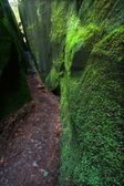 Mossy canyon in Alabama — Stockfoto