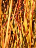 Bozkır bitki arka plan — Stok fotoğraf