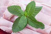 Mint leaves — Zdjęcie stockowe