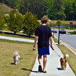 Boy Walking Dogs — Stock Photo