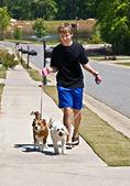 Chłopiec chodzić psy — Zdjęcie stockowe