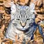 Kitten in Leaves — Stock Photo #8628063
