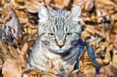 Kätzchen in blättern — Stockfoto