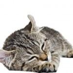 Such a Sleepy Kitten — Stock Photo #8970017