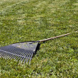 Stock Photo: Rake in the Grass