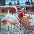 Waterpolo — Stock Photo #8445192