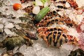 魚介類 — ストック写真