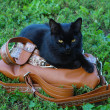 Black cat sitting on a bag on the grass — Stock Photo #8578946