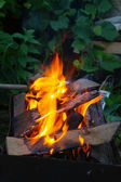 A fire, burning at night on the background of foliage — Stock Photo