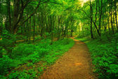 Green forest and pathway — Stock Photo