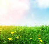 Paardebloemen in groene lente gras — Stockfoto