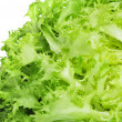 Escarole endive — Stock Photo #10018375
