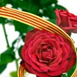 The roses day — Stock Photo