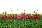 Strawberries on the grass — Stock Photo
