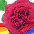 Stock Photo: Gay rose