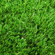 Closeup of green grass — Stock Photo