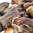 Land snails — Stock Photo #8355664