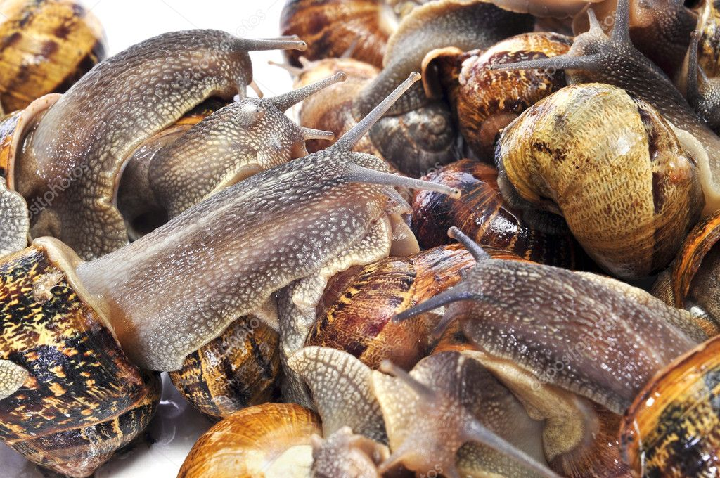Closeup of a pile of land snails  Stock Photo #8355664