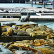 California sea lions on Pier 39 in San Francisco, United States — Stock Photo