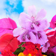 Spring flowers — Stock Photo #9159262