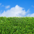 Grass and the sky - Stock Photo