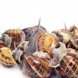 Land snails — Stock Photo #9551973