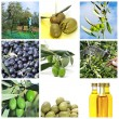 Olive harvesting collage — Stock Photo