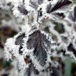 Frosty plant — Stock Photo #9275392