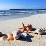 Shellfish beach — Stock Photo