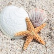 Seastar and shells — Stock Photo