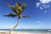 Palm tree spirit — Stock Photo