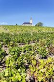 Vine and church — Stock Photo