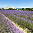 Lavender field and Grignan village — Stock Photo