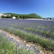 Lavender landscape — Stock Photo