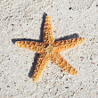 Seastar — Stock Photo